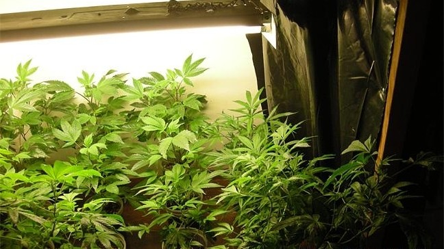 Police find 33 pot plants, bust two teens in Coquille grow | KCBY