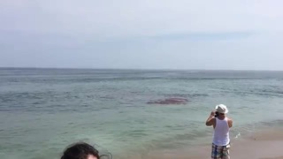 Shark attack on seal at crowded Cape Cod beach caught on